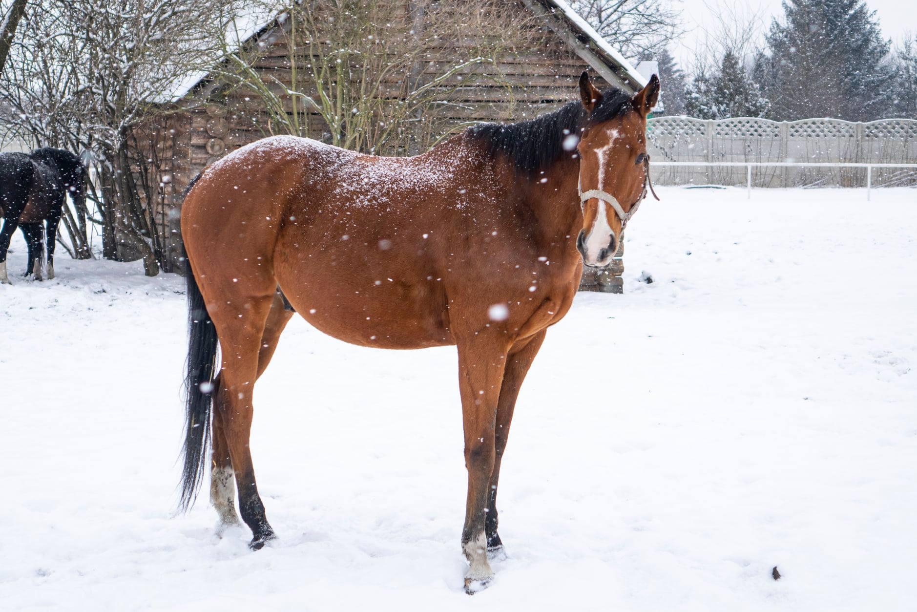 Fundacja Retraining of Racehorses, czyli jak brytyjskie środowisko wyścigowe dba olosy koni pokarierach wyścigowych